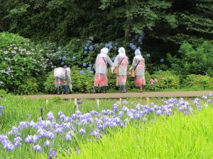 横須賀菖蒲園2